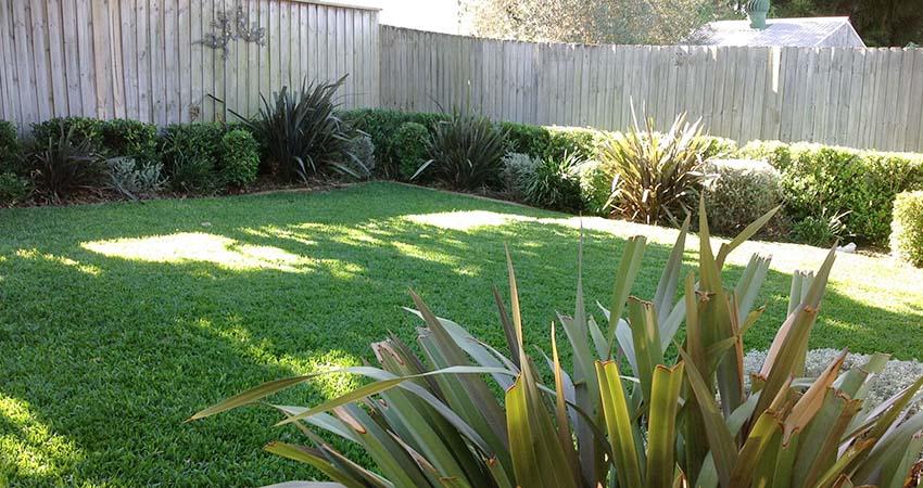 Hedges pruned