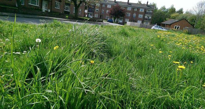 cut long grass