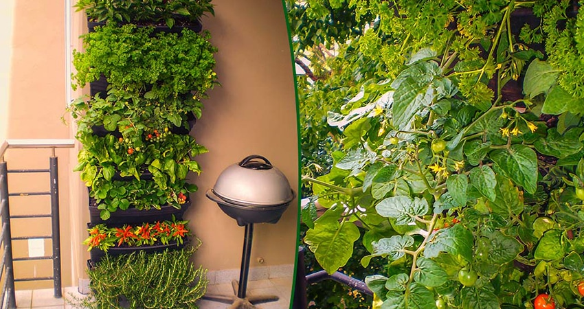wall garden veggies